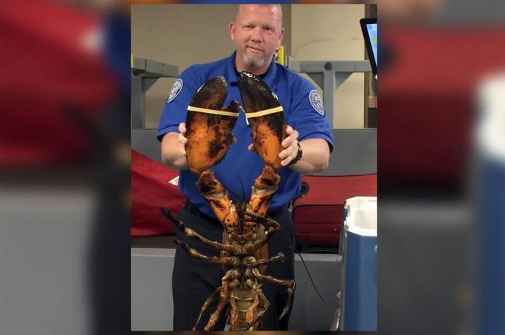 LAMPUNG POST | Lobster Raksasa