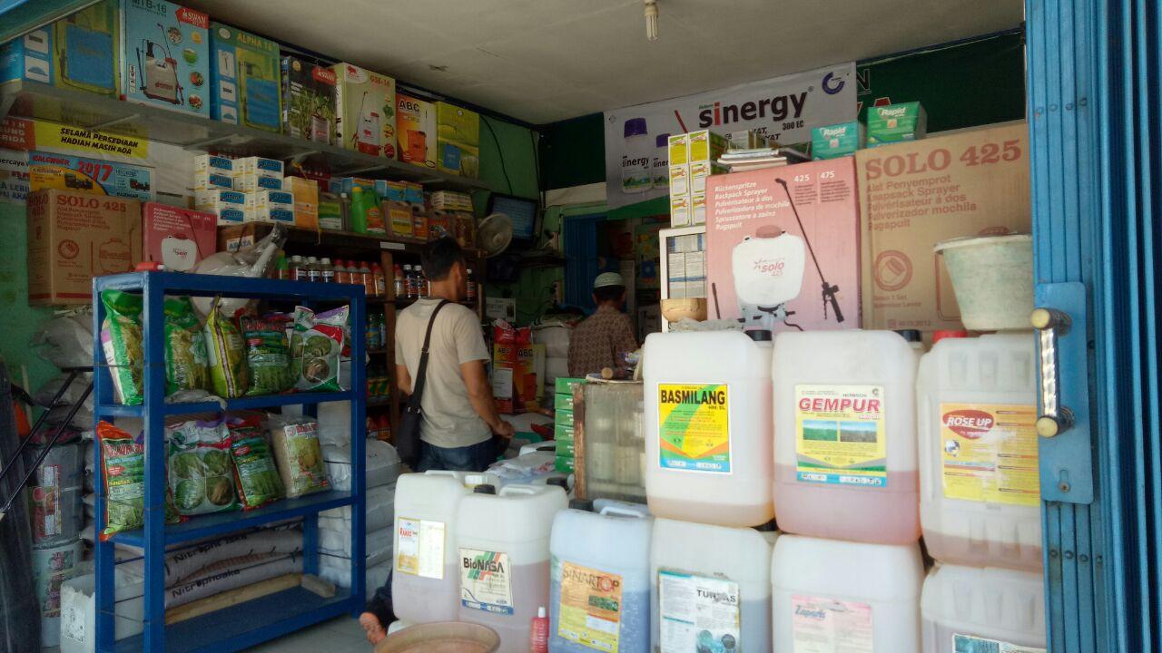 LAMPUNG POST   Masuki Musim Tanam, Bibit Jagung Sulit Didapat di Kalianda
