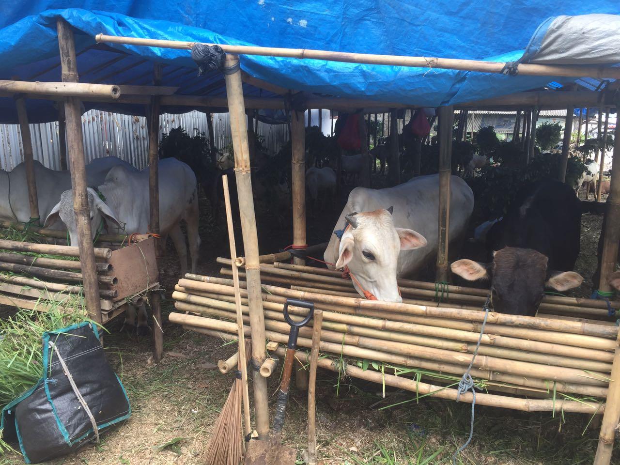 LAMPUNG POST | Pendirian Pasar Hewan Dorong Penguatan Ekonomi Sektor Peternakan