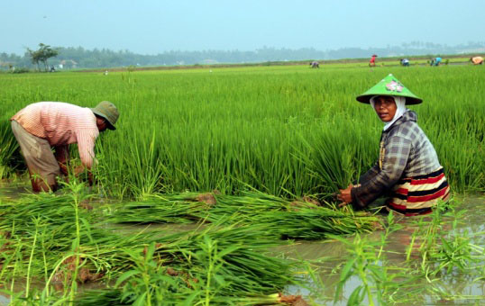LAMPUNG POST | Genjot Produksi Pertanian, Kementan Rehabilitasi Irigasi