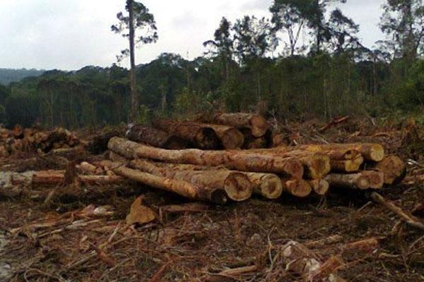 LAMPUNG POST | Kerusakan Hutan Terparah di Register 31 dan 39