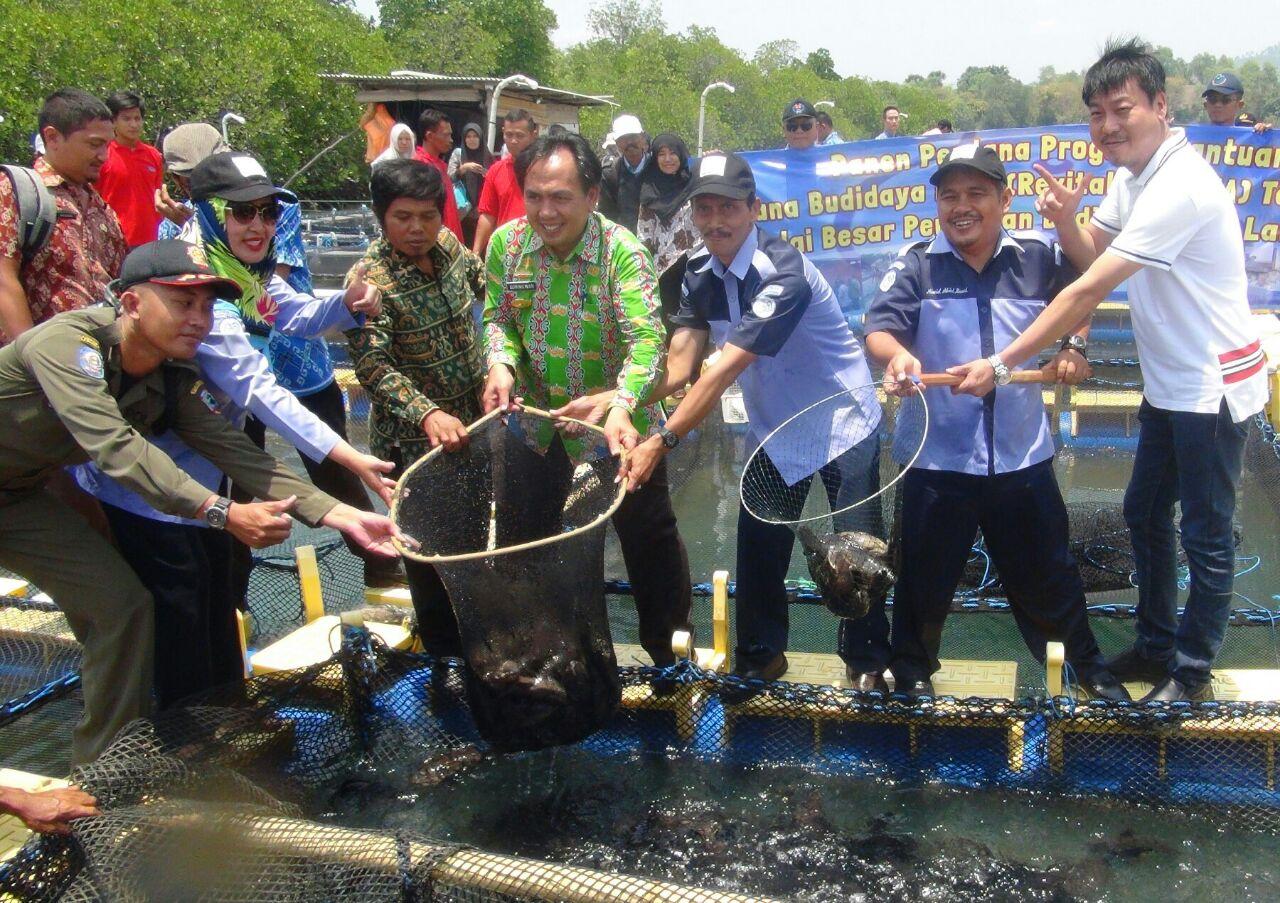 LAMPUNG POST | Panen Memuaskan, Nelayan Optimistis Kembangkan Budi Daya Ikan Kerapu di Keramba
