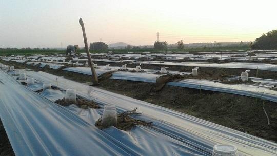 LAMPUNG POST | Hamparan Asa Juid di Lahan Seperempat Hektare