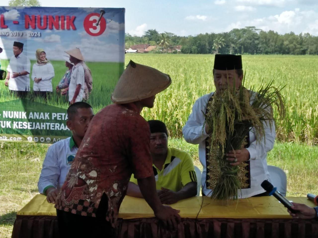 LAMPUNG POST | Stop! Lampung Tak Boleh Impor Beras