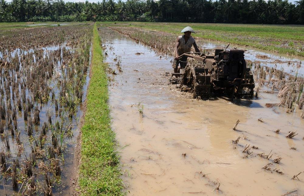 LAMPUNG POST | Peningkatan Produksi Pertanian Menjadi Perhatian Pemprov Lampung