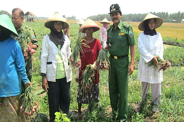 Petani di Lampung Selatan Ogah Tanam Bawang Merah