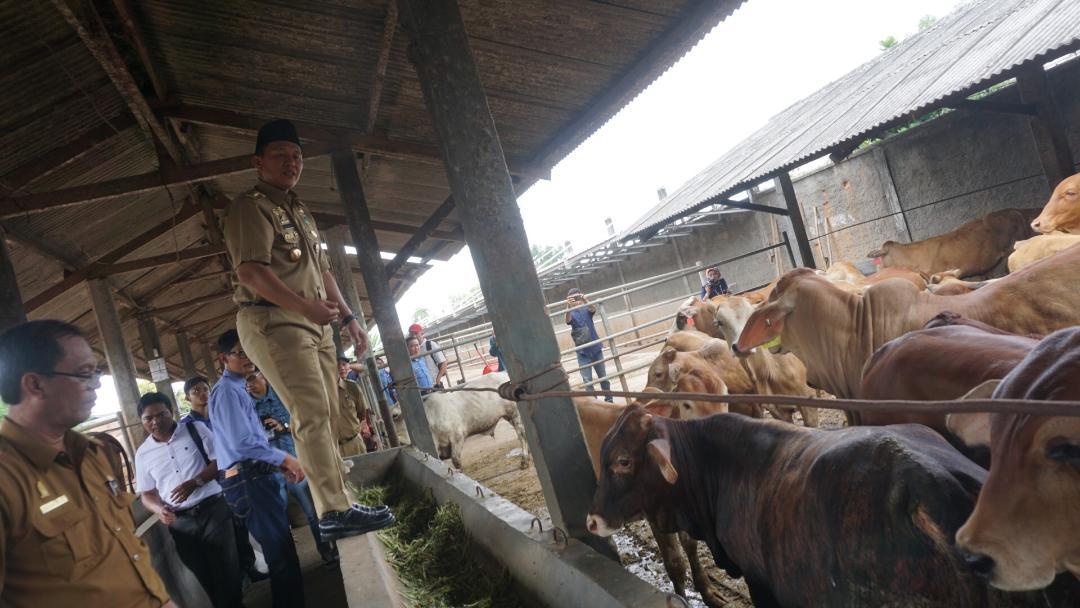 LAMPUNG POST | Wujudkan Swasembada Daging, Lampung Tengah Genjot Populasi Ternak