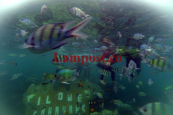 LAMPUNG POST | Spot Snorkeling Pahawang Memesona
