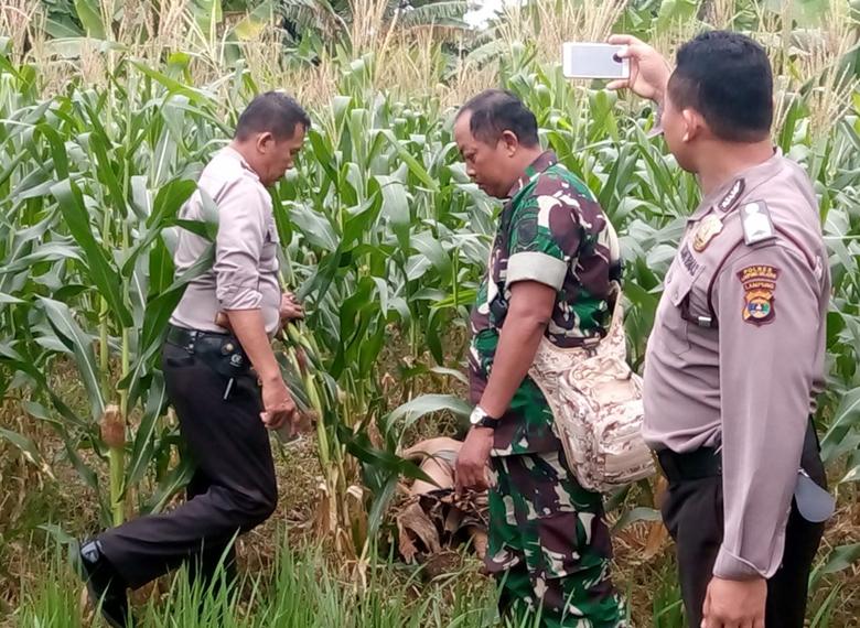 LAMPUNG POST | Diduga Korban Perkelahian, Sopir Travel Ditemukan Tewas di Kebun Jagung