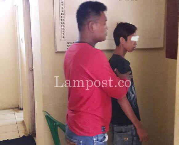 LAMPUNG POST   Polsek Pugung Ciduk Remaja Pencuri Getah Karet