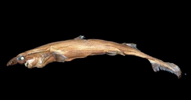 LAMPUNG POST | Ikan Aneh