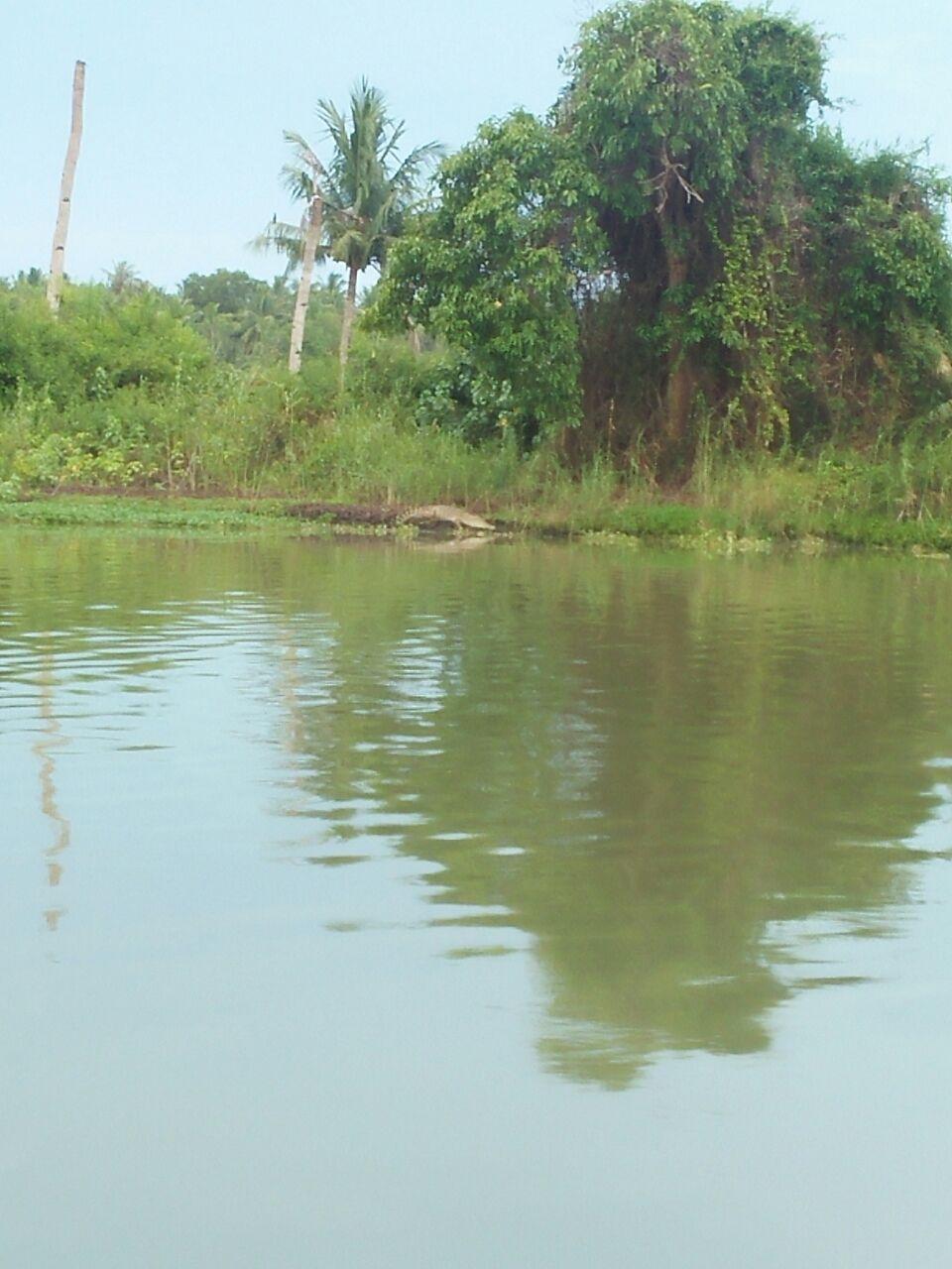 LAMPUNG POST | Warga Bantaran Sungai Way Sekampung Resah dengan Kemunculan Buaya