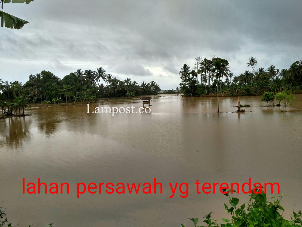 Kondisi Hujan yang Terus Terjadi, Dikhawatirkan Ada Banjir Susulan