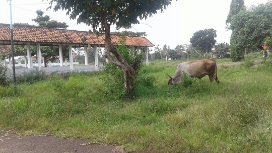 LAMPUNG POST | Terminal di Desa Matarambaru, Riwayatmu Kini