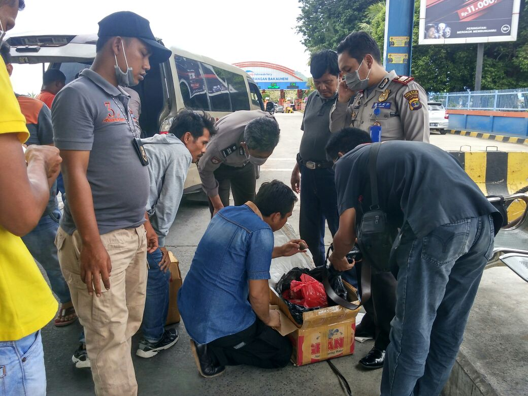 LAMPUNG POST | Penyelundupan Daging Trenggiling Lewat Travel Digagalkan di Bakauheni