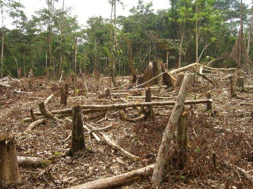 LAMPUNG POST | Kerusakan Hutan Register Sangat Memprihatinkan