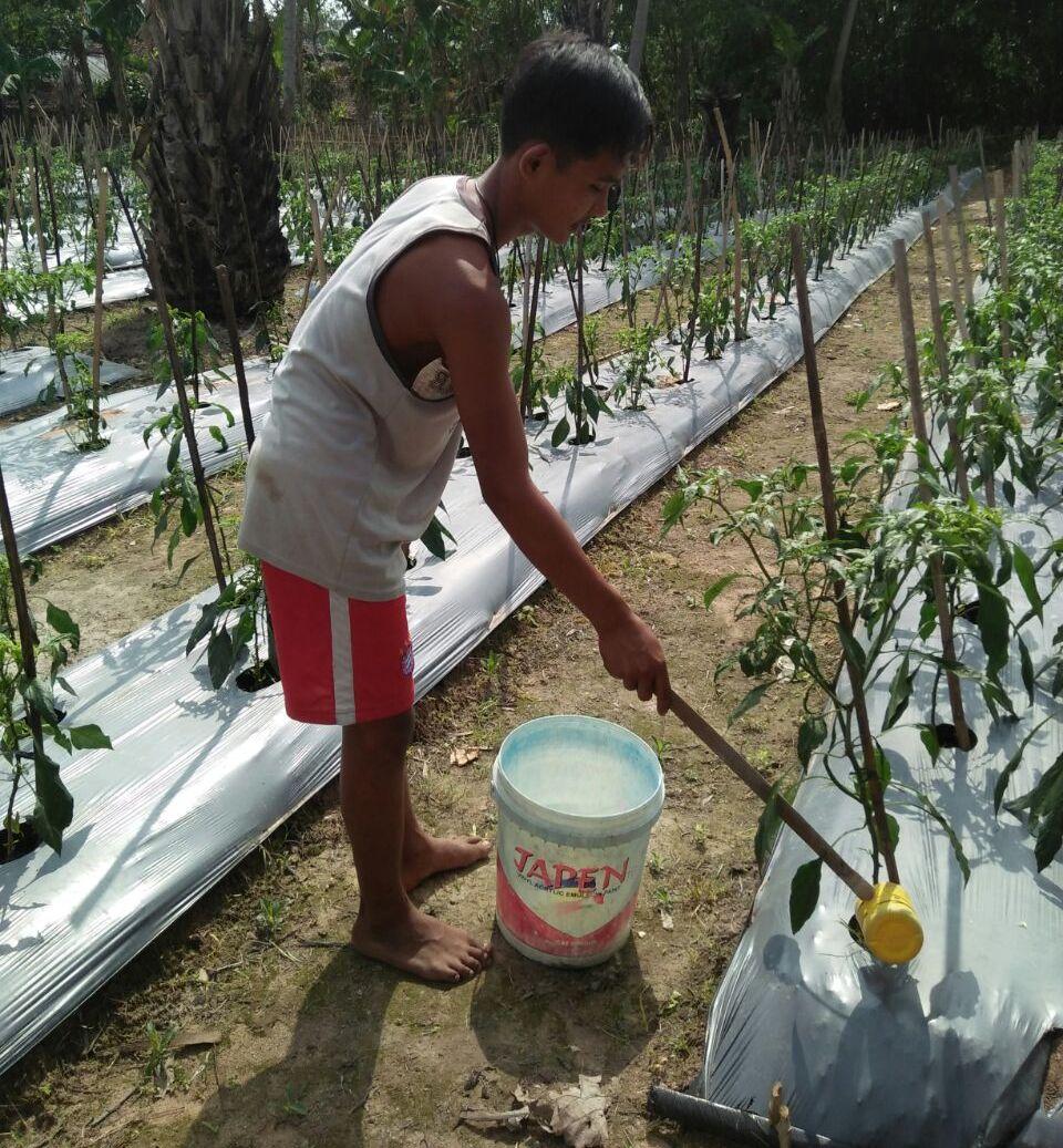 Petani Cabai di Way Sulan Harapkan Bantuan Sumur Bor