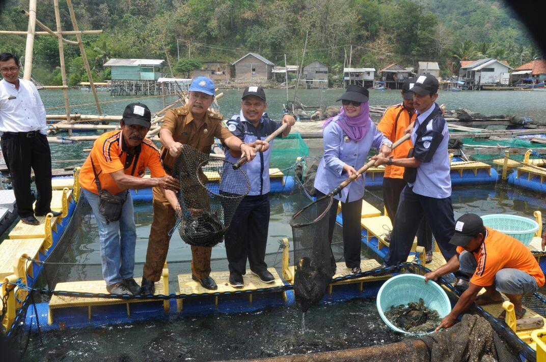 BBPBL dan Kelompok Budi Daya Ikan Panen Perdana 1,8 Ton Kerapu Cantang