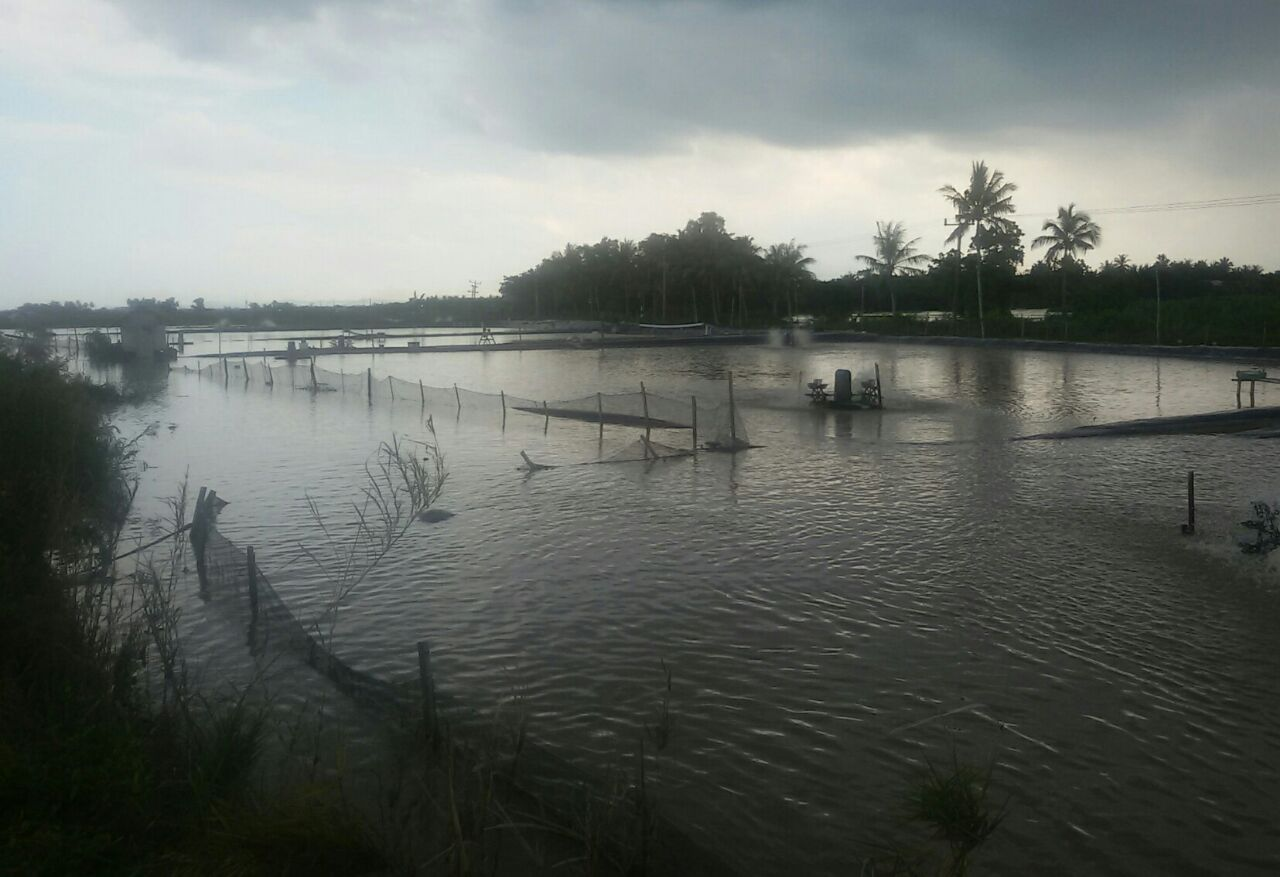 Banjir di Bandaragung Luluh Lantakkan Puluhan Hektare Tambak Warga