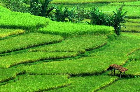 LAMPUNG POST   Pertanian Masih Andalan Lampung