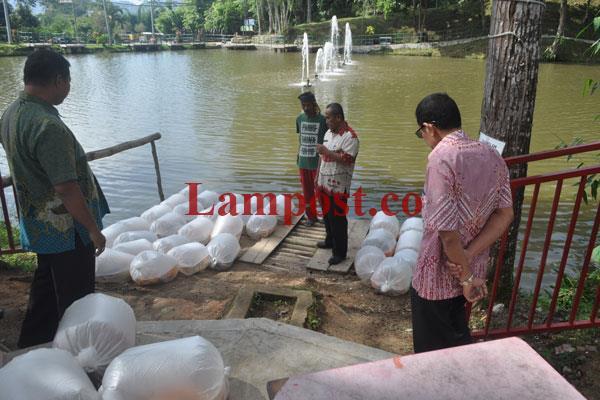 LAMPUNG POST | Pemkab Lambar Kembali Tebar 3 Kuintal Ikan Mas di Hamtebiu