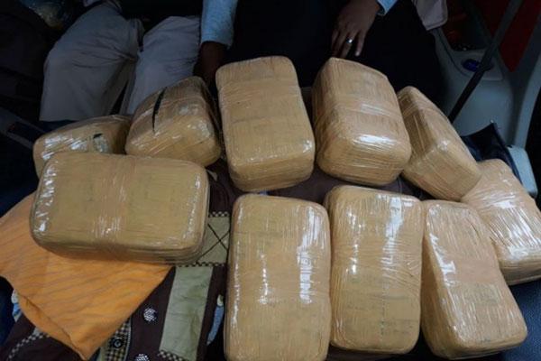 LAMPUNG POST | Polisi Gagalkan Pengiriman 46 Kg Ganja di Pelabuhan Bakauheni