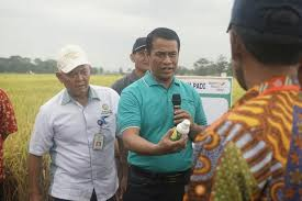 LAMPUNG POST   Mentan Borong 200 Ton Benih Padi Unggul