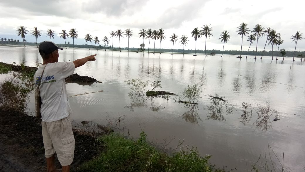 LAMPUNG POST | Tanaman Padi Puso Akibat Banjir di Sragi Capai 254 Ha