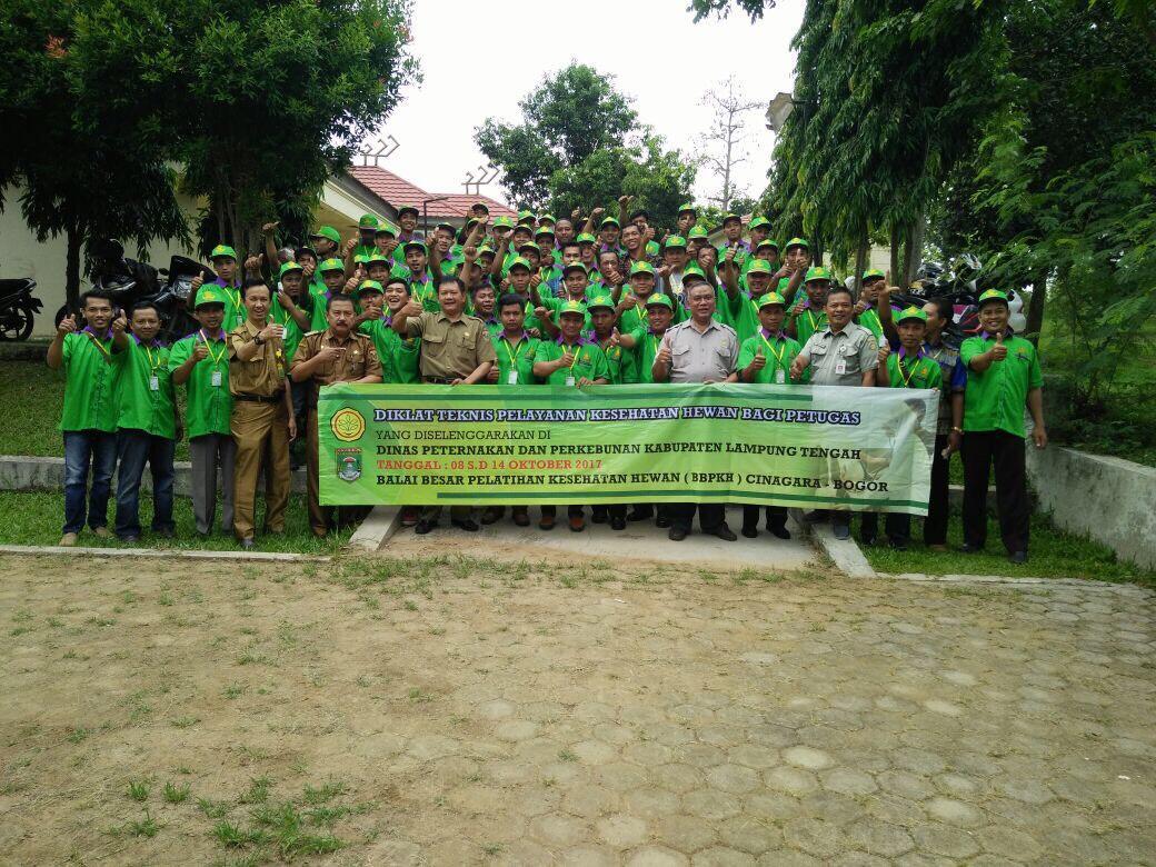 Lampung Tengah Jadi Proyek Percontohan Program Percepatan Sapi Bunting