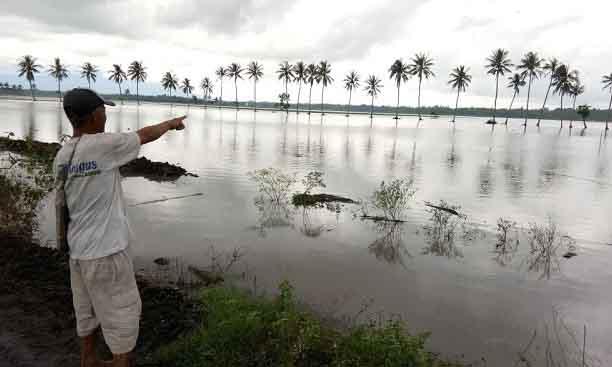 Ribuan Hektare Sawah di Palas Terendam Banjir