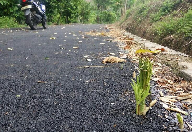Baru Dibangun, Jalan Latasir Sudah Ditumbuhi Rumput