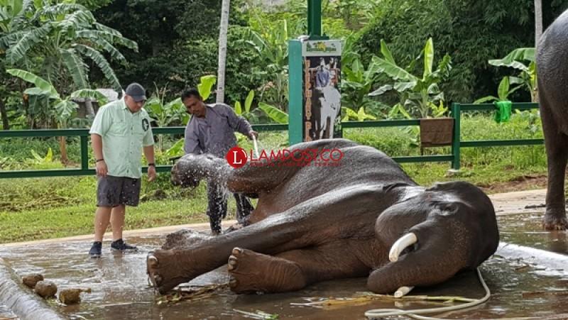 90 Ekor Gajah Ditemukan Mati di Botswana