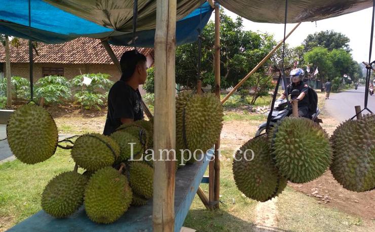 LAMPUNG POST | Festival Durian di Way Lalaan Sedot Minat Warga