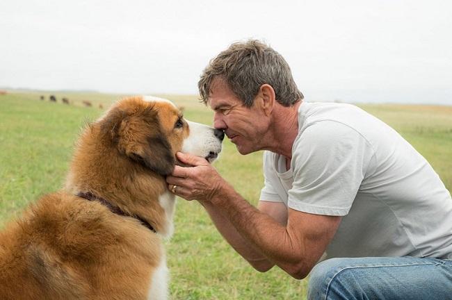 LAMPUNG POST | Anjing dan Jodoh