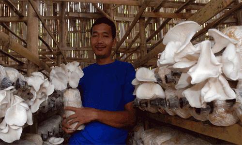 LAMPUNG POST | Dongkarak Usahawan, Bupati Lamsel bakal Datangkan Pengusaha Jamur Sukses dari Jogja