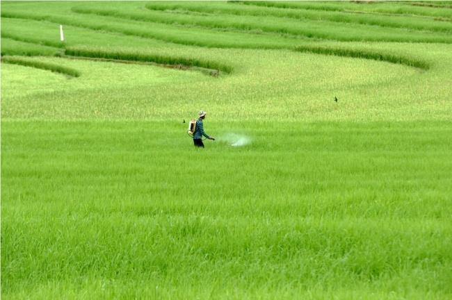 LAMPUNG POST | Pertanian Indonesia Masuk 25 Besar Dunia