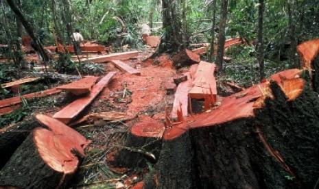 Polres Pesawaran Tangkap Satu Terduga Pembalakan Liar dan 26 Gelondong Kayu Sonokeling