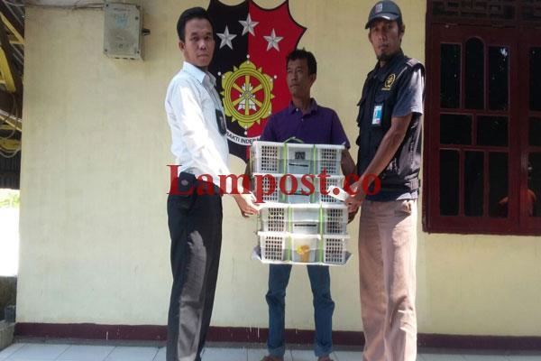 LAMPUNG POST | Polisi Pelabuhan Sita 91 Ekor Burung Ilegal dari Dua Bagasi Bus AKAP