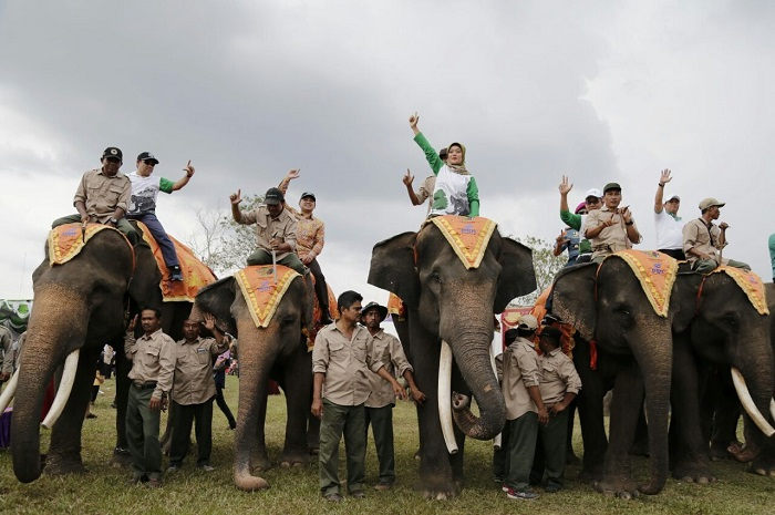 Konservasi Gajah di Festival Way Kambas