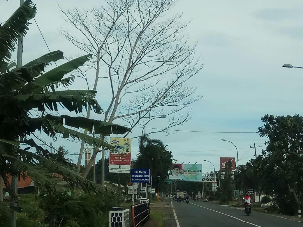 Cuaca Ekstrem, Bupati Lampung Selatan Imbau CamatWaspadai Pohon Tumbang