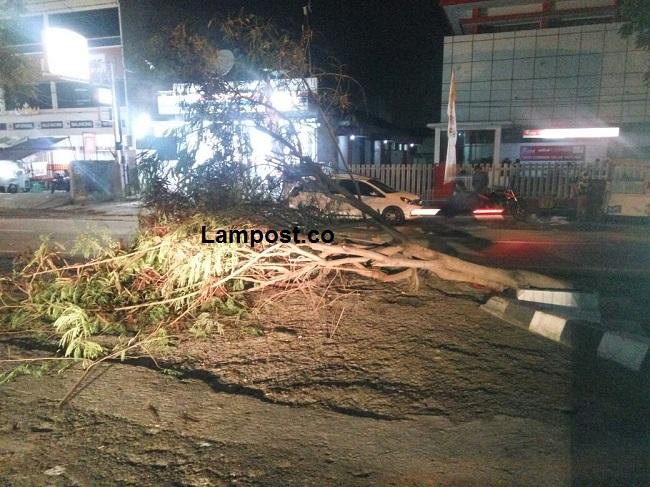 Pohon Tumbang Dibiarkan Menutupi Jalan