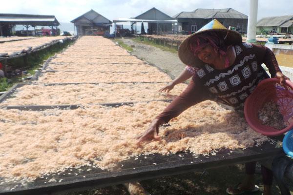 LAMPUNG POST | Buruh Wanita Pemilah Ikan Teri  Bertahan dengan Upah Minim