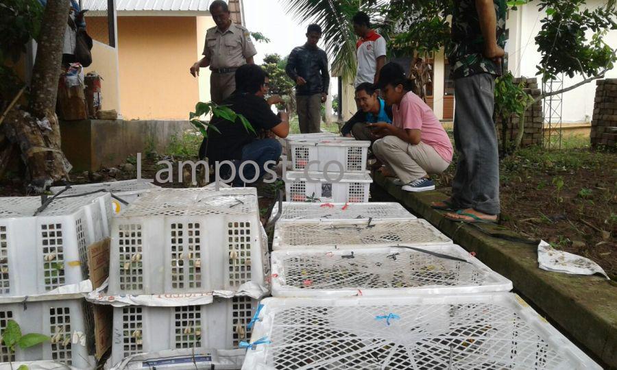 Lagi, Ratusan Ekor Burung dan Trenggiling Tanpa Dokumen Diamankan