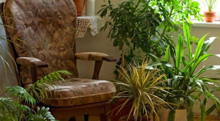 LAMPUNG POST | Ternyata, Rumah dengan Tanaman Hijau Bikin Penghuninya Panjang Umur