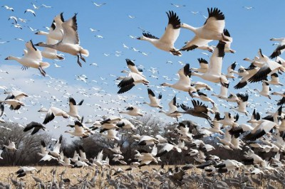 LAMPUNG POST | Iklim dan Migrasi Burung