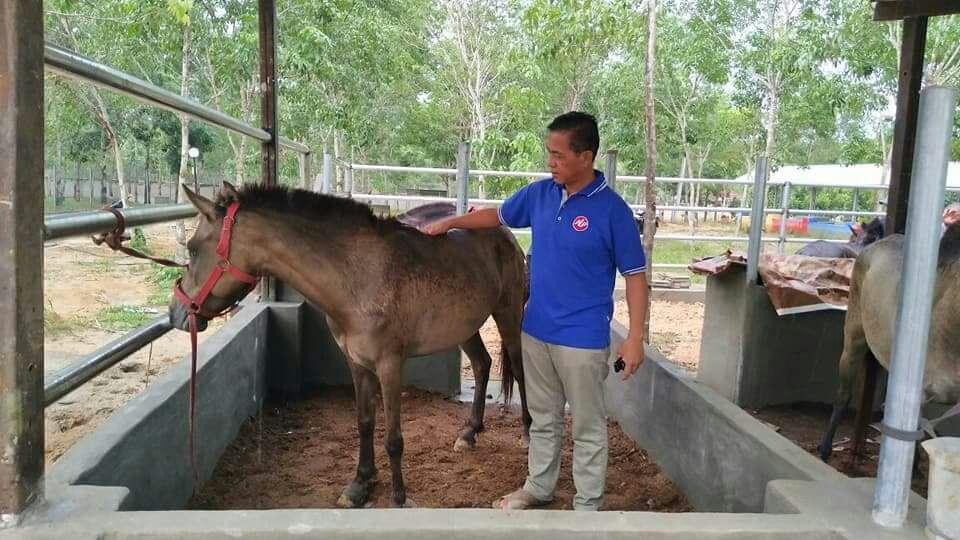 Taman Kehati Dapat Tambahan 4 Ekor Kuda