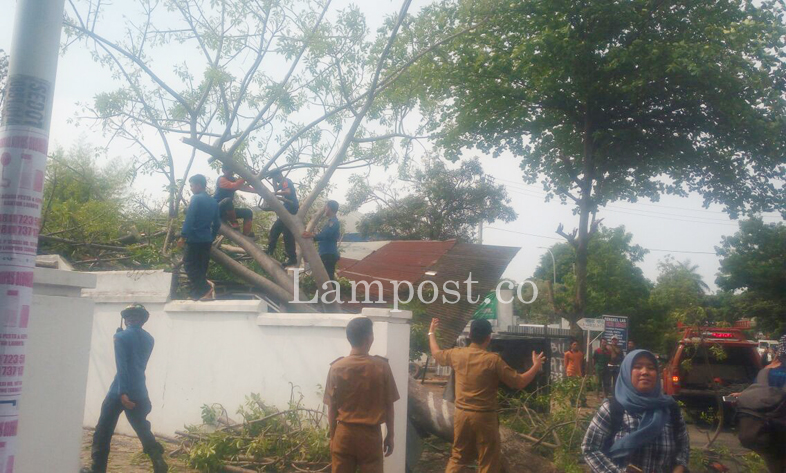 LAMPUNG POST | Pohon Tumbang Timpa Bengkel Las di Jalan Arif Rahman Hakim