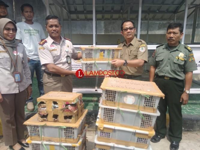 Balai Karantina Amankan 850 Burung Tanpa Dokumen di Bakauheni