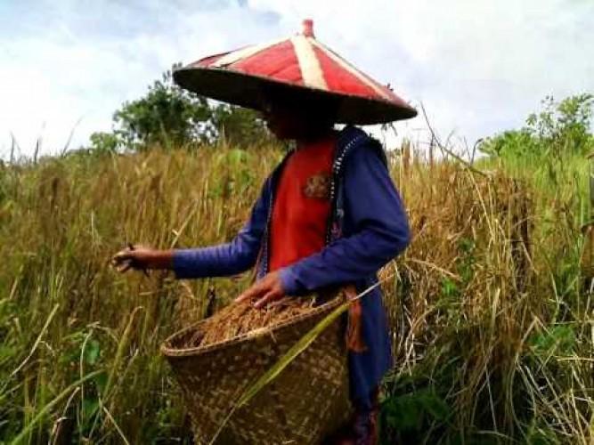 Behuma, Cara Berkebun Orang Lampung (1)