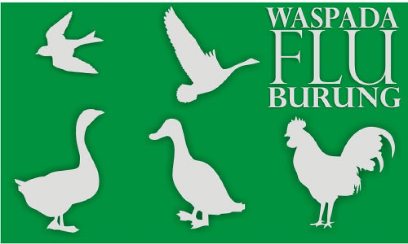 Belum Ditemukan Kasus Flu Burung di Lampura